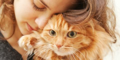 Pet Care Experts List 3 Signs of Stress in Cats, ,