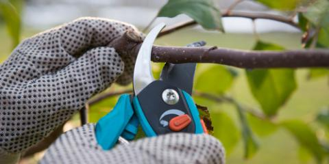 3 Reasons to Have Professional Tree Pruning, Kalispell, Montana