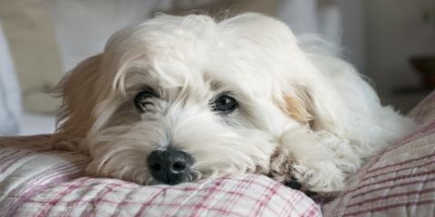 How to Help Your Pet Recover From Surgery, Florence, Kentucky