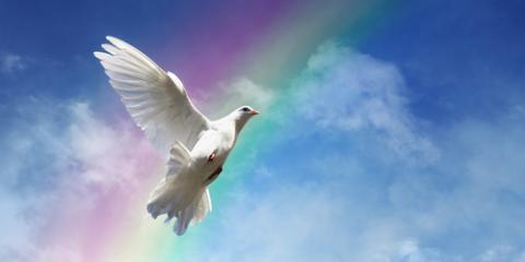 3 Heartfelt Symbols Represented By Funeral Dove Release, Covington, Kentucky
