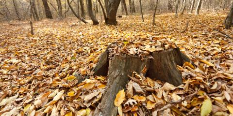 4 Reasons to Hire a Professional for Tree Stump Removal, Center City, Minnesota