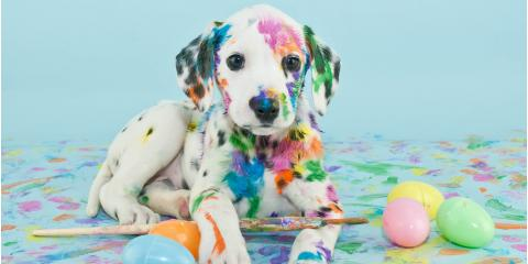 4 Easter Items to Keep Away From Pets This Holiday, Ewa, Hawaii