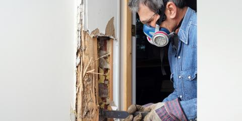 What Homeowners Want to Know About Termite Infestations, San Fernando Valley, California