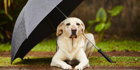 3 Tips for Keeping Your Pets Safe During Hurricane Season, Hilo, Hawaii