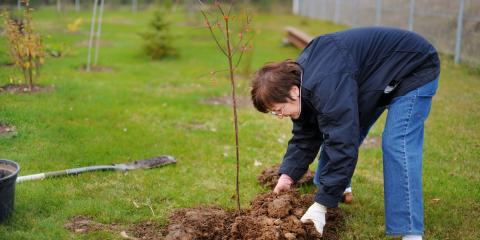 3 Care Tips for Newly Planted Trees, Nicholasville, Kentucky