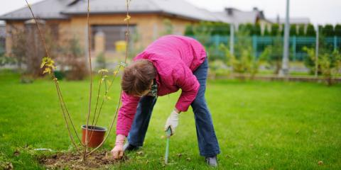 3 Useful Tips For Planting Trees in the Fall , Nicholasville, Kentucky