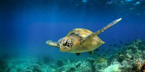 All About Hawaiian Monk Seals & Green Sea Turtles, Lihue, Hawaii