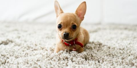 How to Prevent Pets From Damaging Carpets, Fort Worth, Texas