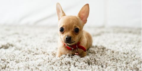 3 Carpet Maintenance Tips for Pet Owners, West Whitfield, Georgia