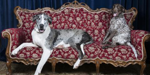 3 Tips to Prepare for Furniture Cleaning When You Have Pets, High Point, North Carolina