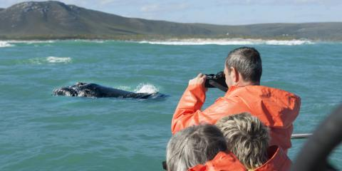 What to Expect This Whale Watching Season, Waianae, Hawaii