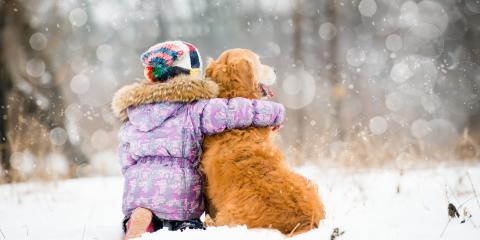 3 Tips For Keeping Your Pets Healthy & Safe This Winter, Clarksville, Arkansas