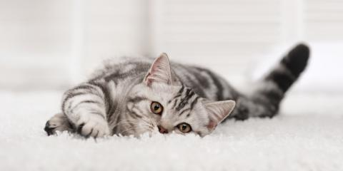 What Are the Best Carpets for Cats?, Hamilton, Ohio