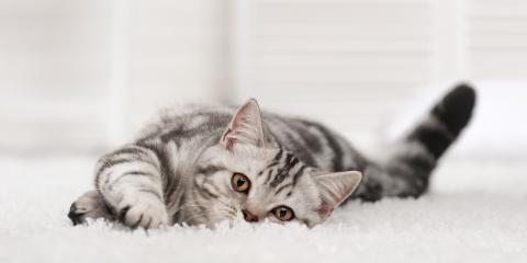What Type of Carpet Is Best for Cats?, Prairie du Chien, Wisconsin