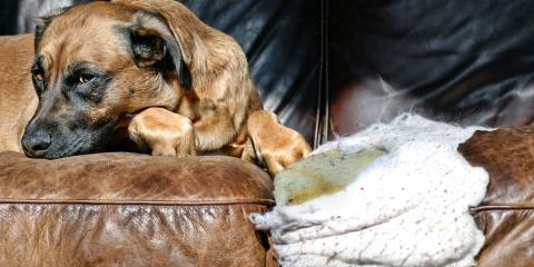 4 Simple Tips for Dog-Proofing Your Home, O'Fallon, Missouri