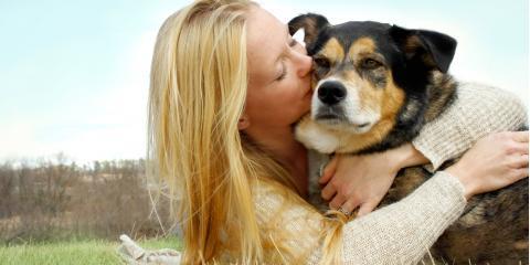 3 Signs of Pain in Elderly Dogs, Atlanta, Georgia