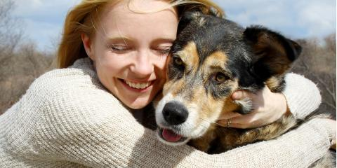 3 Endocrine Disorders That Affect Dogs, Sharonville, Ohio