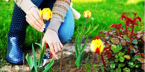 5 Gardening Tips & Tricks for a Beautiful Landscape, Delhi, Ohio