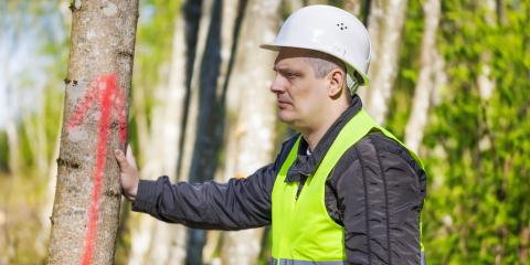 Why It's Best to Hire a Professional Tree Removal Service, Milton, Pennsylvania