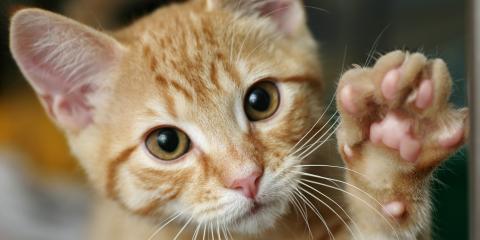 3 Tick-Borne Diseases That Affect Dogs & Cats, Lincoln, Nebraska