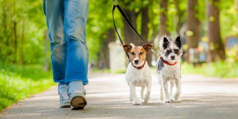 4 Tips on Choosing a Dog Collar at the Pet Store, Anchorage, Alaska