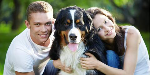 3 Essential Pet Boarding Questions You Should Ask, Columbia, Missouri