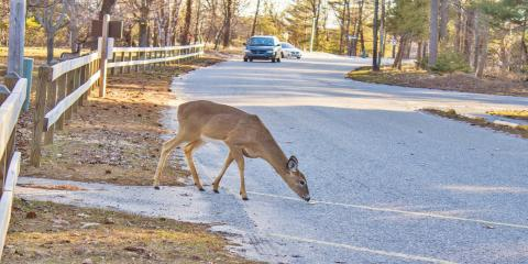 How Can a Deer Damage Your Vehicle?, Covington, Kentucky