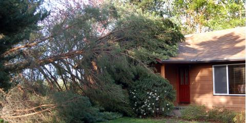 What Do I Do When a Tree Falls on My House?, West Hartford, Connecticut
