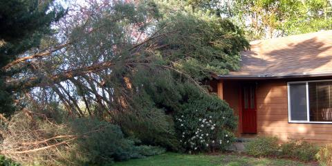 3 Steps to Take If a Tree Falls on Your House, Kalispell, Montana