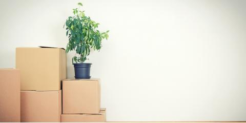 3 Moving Tips for Getting Plants to Your New Home, Cincinnati, Ohio