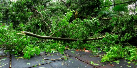 3 Benefits of Hiring a Professional Tree Service to Trim Overgrown Foliage, Newburgh, New York