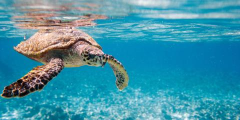3 Fun Facts About Sea Turtles You Might See on Snorkeling Tours, Waianae, Hawaii