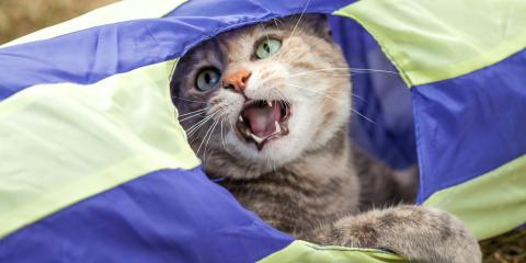 5 Possible Reasons Why Your Cat Is Meowing So Much, Wahiawa, Hawaii