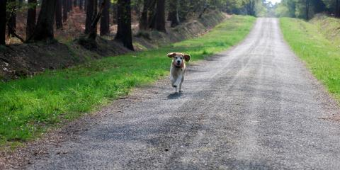 3 Tips for Protecting Dogs on Hot Asphalt, Anchorage, Alaska