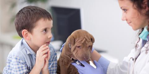 Which Pet Vaccines Does Your Puppy Need?, Honolulu, Hawaii