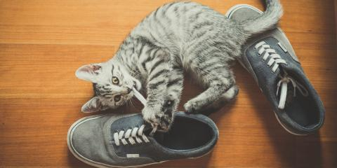 Why Do Cats Love Shoes?, Troy, Missouri
