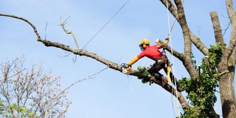 Why Thinning Is Important to a Summer Tree Care Routine, Tyro, North Carolina