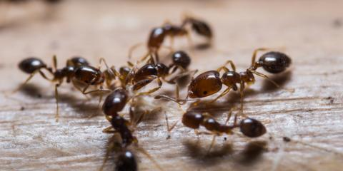 5 Effective Methods for Ant Control, Bethalto, Illinois
