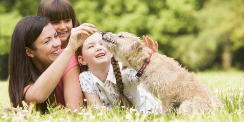 How to Prep Your Dog for a Veterinarian Exam, O'Fallon, Missouri