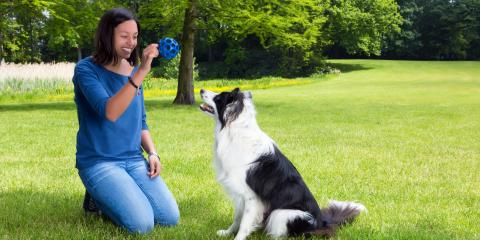 How to Protect the Yard From Your Dog  , Honolulu, Hawaii