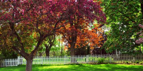 5 Common Tree Pruning Mistakes, Kalispell, Montana