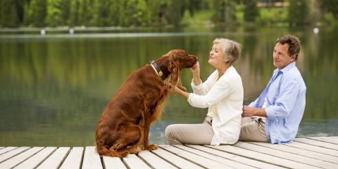 4 FAQ About Pets & Sunburn, Covington, Kentucky