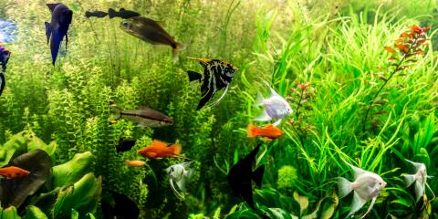 4 Fish That Are Excellent Pets for Your New York Home, Manhattan, New York