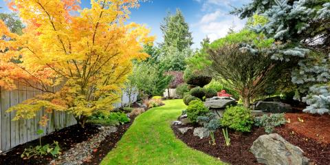 How Does Quality Tree Service Increase Your Property Value?, West Hartford, Connecticut