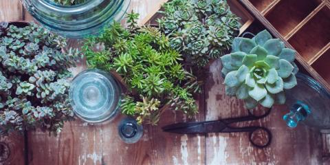 3 Gardening Tips for Caring for Succulents This Winter, Fairfield, Ohio