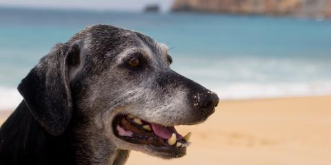 Common Behavior Changes to Expect in Your Senior Dog, Middlefield, Ohio