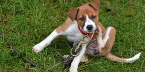 Why You Should Keep Your Pets Free From Fleas & Ticks, Amsterdam, Virginia