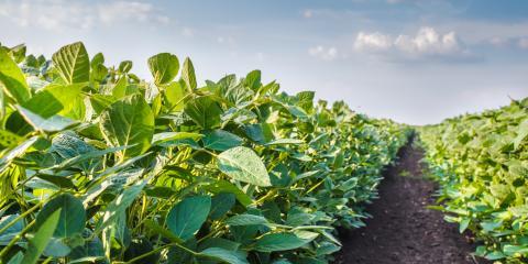 Free Soybean Cyst & Soil Nematode Testing in Wisconsin, Adams, Wisconsin