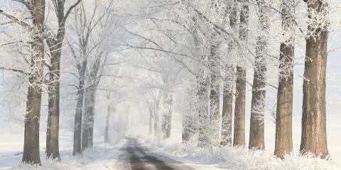3 Tips for Dealing With Ice-Covered Trees, Florence, Kentucky