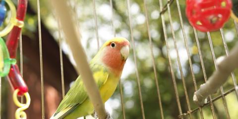 What Is a Bird Wellness Exam?, Fairport, New York
